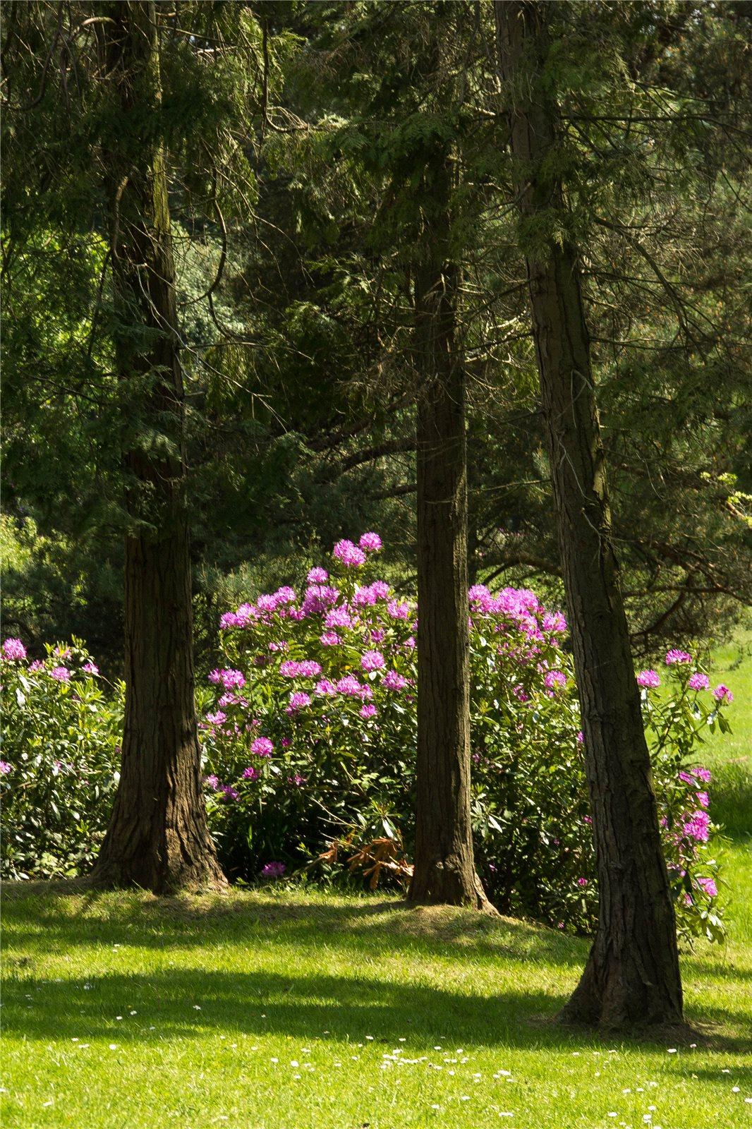 Chelsea Flower Show,Garden